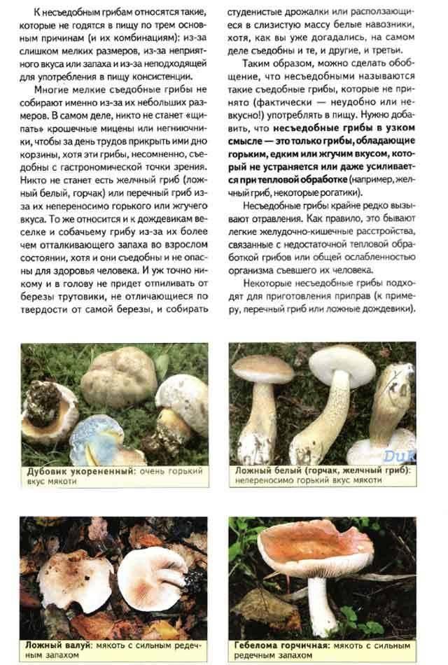 Знакомимся с пластинчатыми грибами: в чем их особенность, и какие бывают