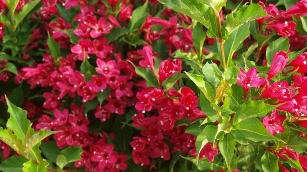 """""""ленивый сад"""": первоцветы, которые практически не нуждаются в уходе"""