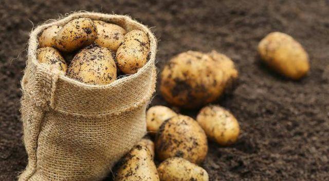 Удобрения для картофеля при посадке в лунку весной