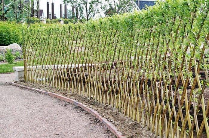 Как сделать живой забор из ивы: выбор растений, инструкция посадки