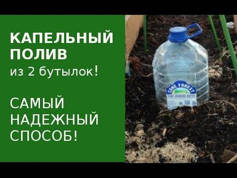 Как сделать своими руками капельный полив из пластиковых бутылок