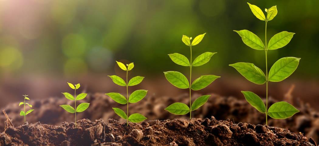 «вымпел» – применение универсального регулятора роста для растений