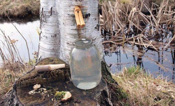 Березовый сок: полезные свойства и противопоказания, как сохранить
