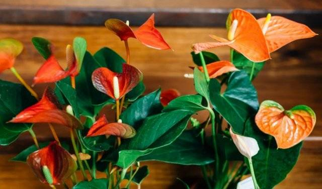 Как правильно черенковать растения в домашних условиях?