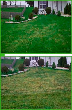 Уход за газоном осенью: аэрация, скарификация, подкормка. что такое скарификация газона? когда проводить аэрацию и скарификацию газона