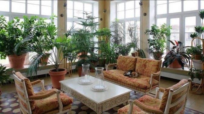 Как создать в доме зимний сад. инструкция с фотографиями