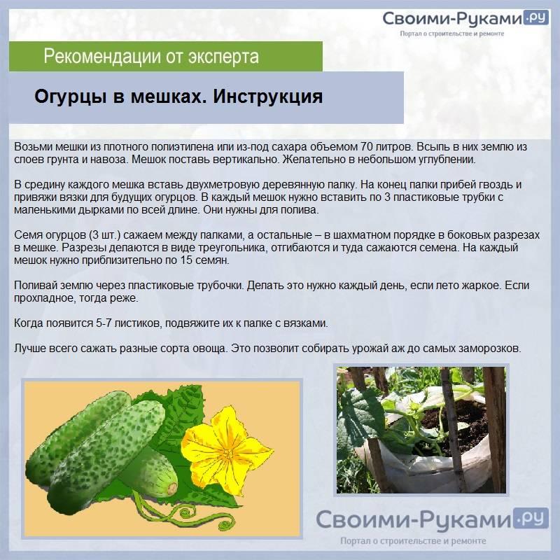Как правильно посадить и вырастить огурцы в мешках, чтобы получить хороший урожай?