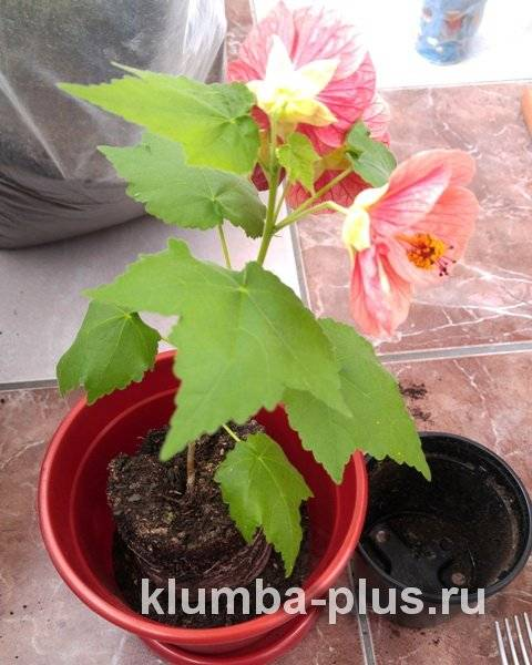 Дренаж для комнатных растений по правилам