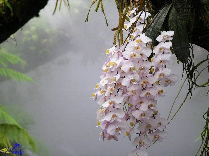 Удобрения для орхидеи фаленопсис