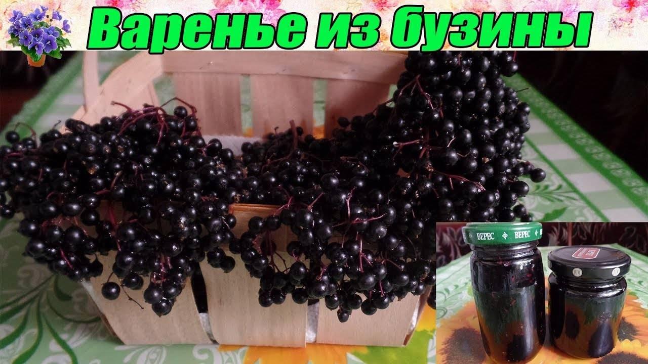 Санберри: солнечная ягода здоровья. санберри: полезные свойства, противопоказания, лучшие рецепты заготовок на зиму