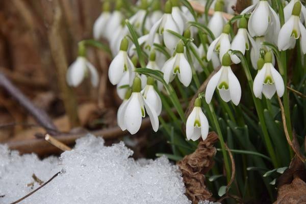 В марте пора открывать дачный сезон