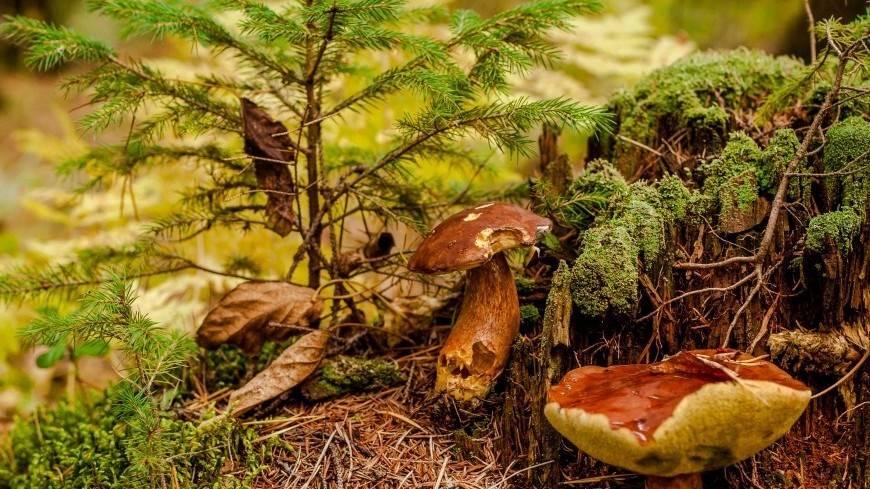 Как правильно собирать грибы в лесу, правила