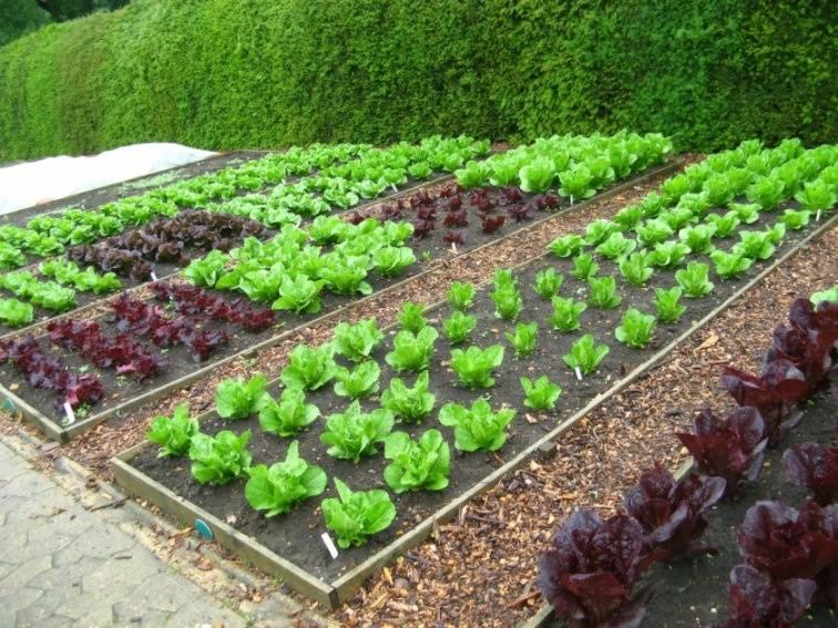 Самоделки для огорода и дачи: интересные идеи