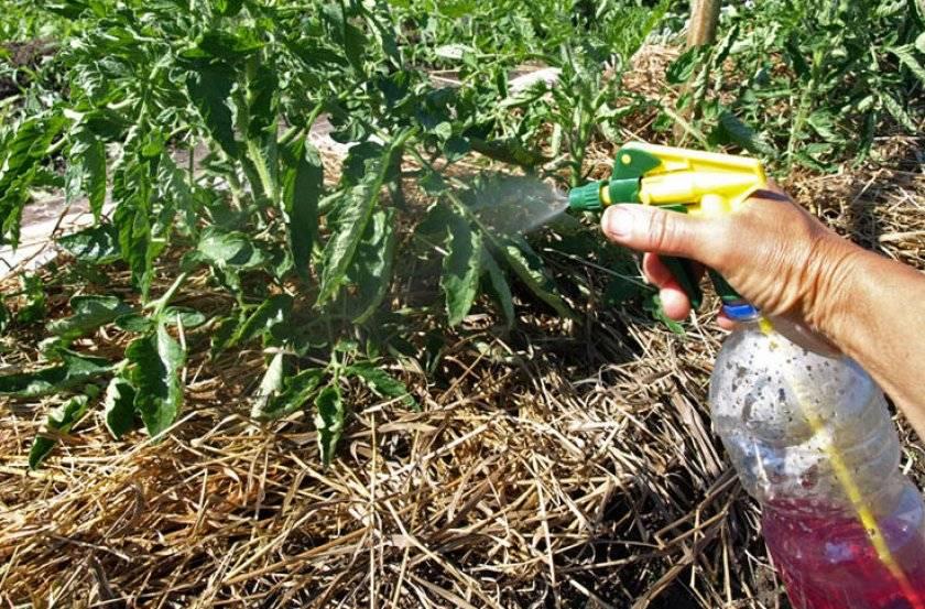Вирус табачной мозаики растений, как лечить