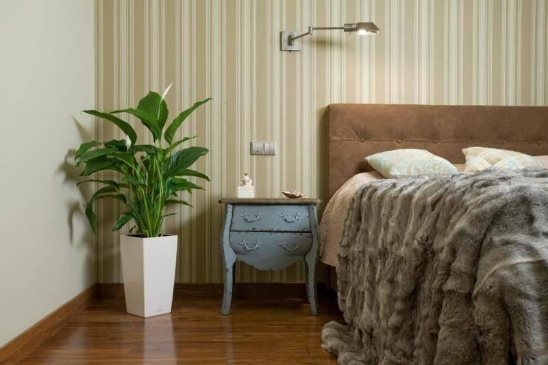 Советы по выбору комнатных растений для спальни