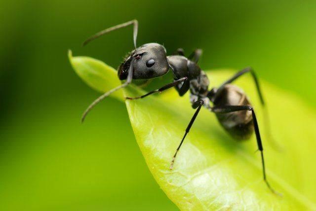 Как избавиться от муравьёв: обзор различных методов борьбы