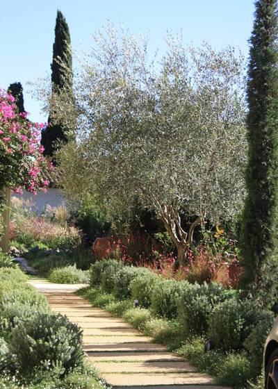 Выращивание садовой канны