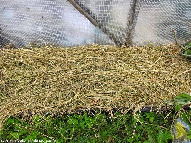 Как поэтапно сажать картошку под солому на огороде?