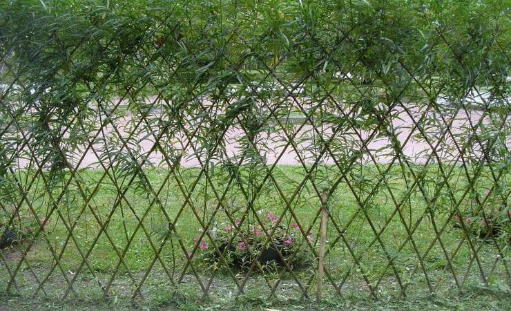 Живая изгородь на даче своими руками: правила посадки, выращивания и ухода