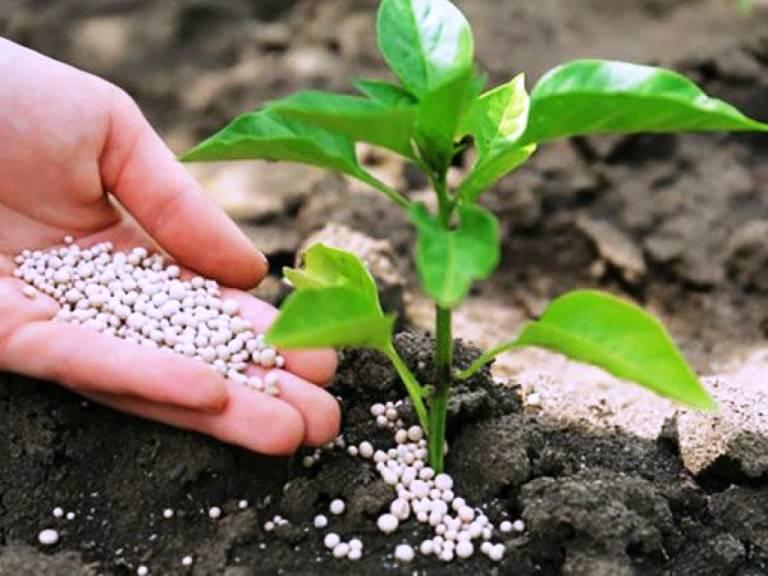 Мочевина — эффективное удобрение для сада и огорода