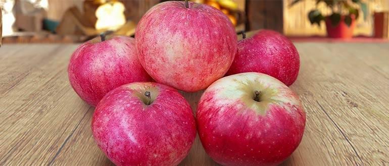 Яблоня штрифель — старинный прибалтийский сорт