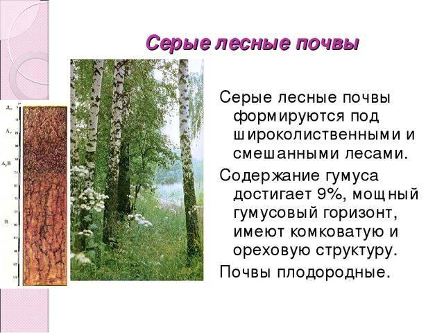 Состав и свойства серых лесных почв