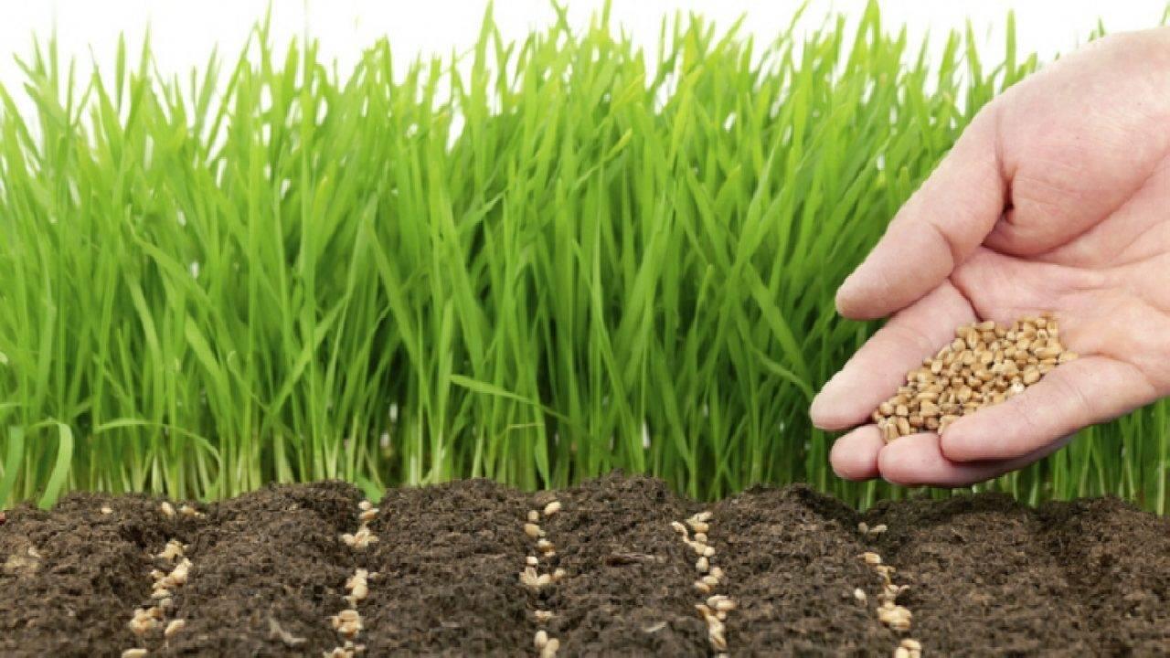 Сидераты на даче: дешевый способ удобрить землю, не требующий вложения сил