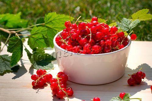 Смородина красная: лучшие сорта, уход и выращивание