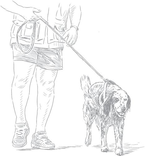 Как правильно построить вольер для собак: фото конструкций и рекомендации собаководов