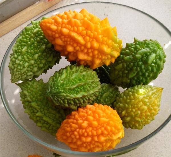 Момордика— выращивание и уход