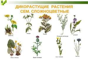 Перечень ароматных пряных трав, которые можно вырастить на огороде