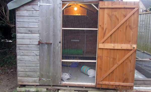 Эффективное разведение кроликов в шедах