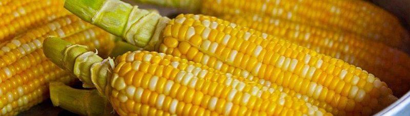 Кому интересно, когда созревает кукуруза?