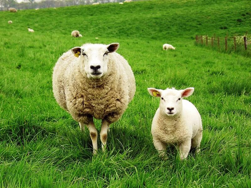 своему короткий бизнес план овцеводства таблицы фото может быть как