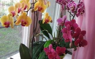 Чем подкормить орхидею в домашних условиях