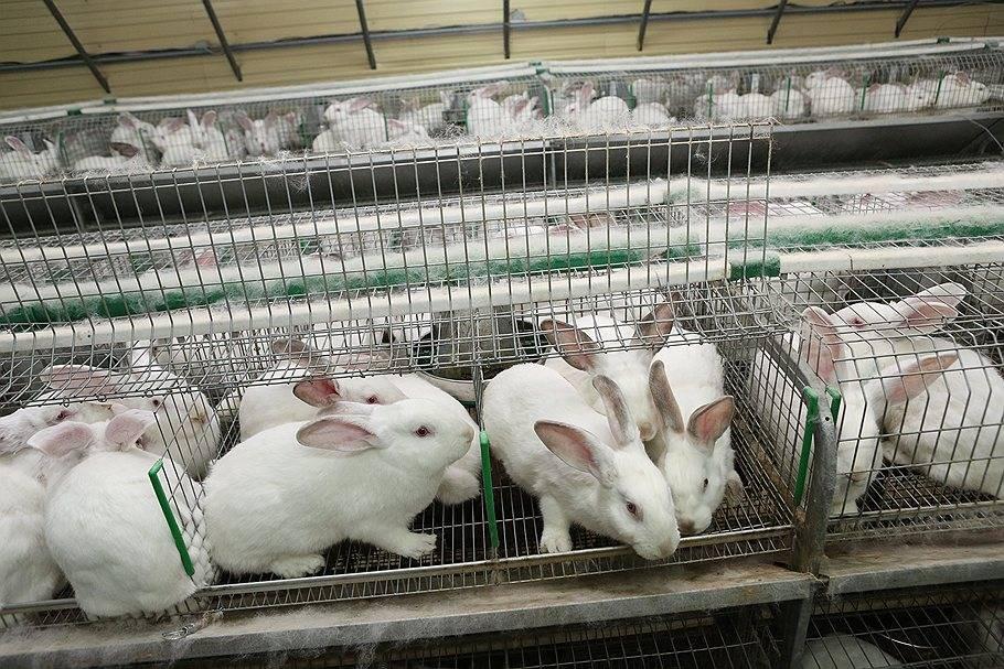 Основы выращивания кроликов в ямах от а до я