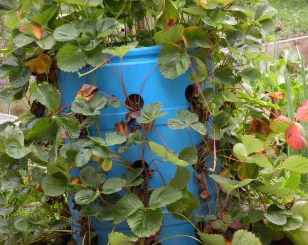 Вертикальные грядки – что можно вырастить?