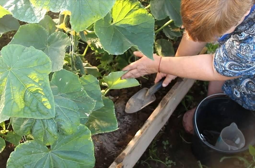 Какие растения можно подкармливать хлебным настоем. удобрение из хлеба — как приготовить настой для клубники и огурцов. супер удобрение из дрожжей своими руками