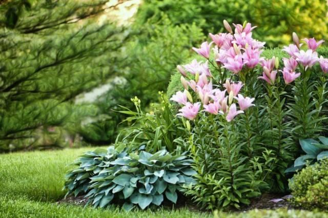 Какие варианты цветов лучше всего посадить в саду рядом с розами: беспроигрышные сочетания!