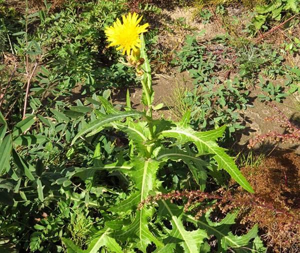 Народные средства борьбы с вредителями сада и огорода