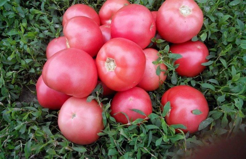 Сорт гибрида «марьина роща f1»: фото, видео, отзывы, описание, характеристика, урожайность