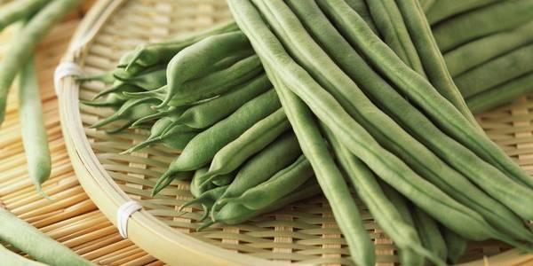 Стручковая фасоль: полезные свойства и противопоказания, рецепты