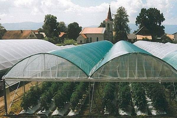 Как выбрать качественную затеняющую сетку для растений в теплице