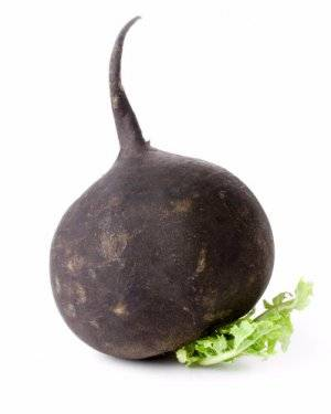 Секреты и тонкости выращивания черной редьки в открытом грунте