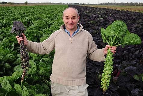 Когда сажать брюссельскую капусту в 2020 году?