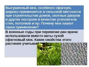 Применение мха на огороде.