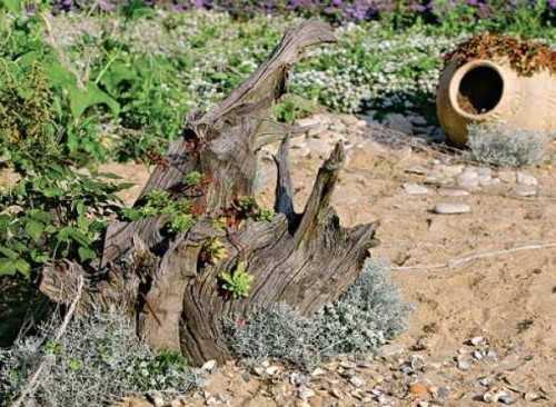 Рутарий - композиция из старых корней