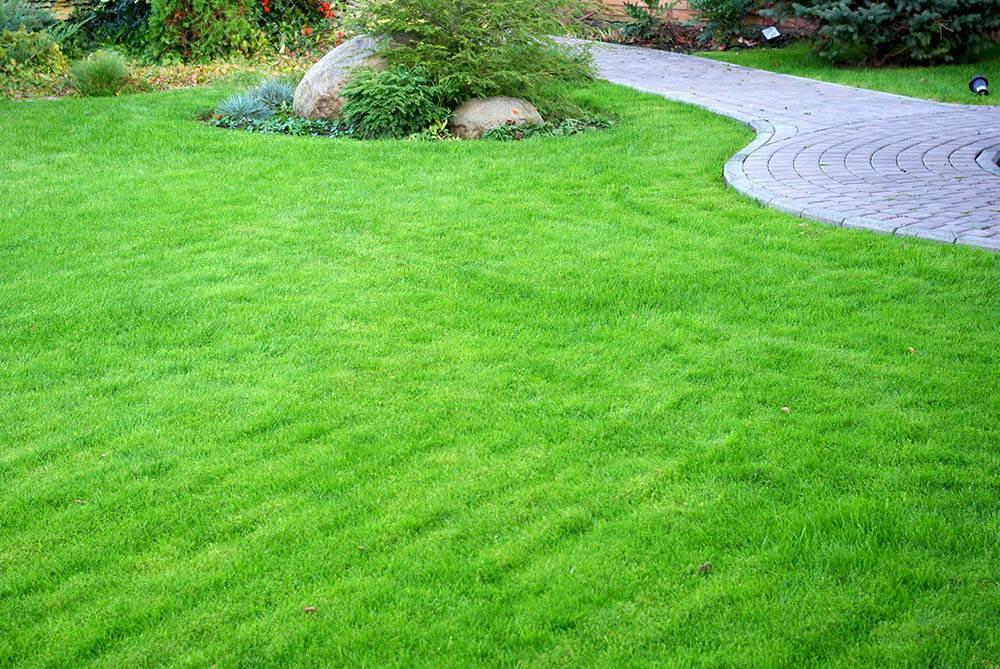 Трава для газона — травосмеси, семена и формирование многолетнего дизайна (120 фото)