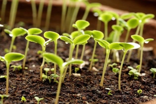 Применение кожуры цитрусовых в огороде для подкормки и против вредителей