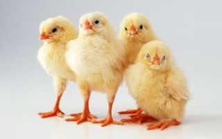 Аминовитал — биодоступный препарат при авитаминозе животных. инструкция по использованию